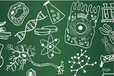 Как можно быстро выучить биологию